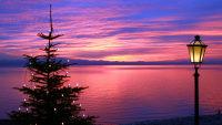 g-weihnachtsbaum
